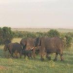 elephants walking into the sunset, kind of