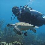 Photo de VIP Diving
