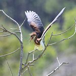 One of the many species at Pinckney Island National Wildlife Refuge.