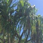 The beautiful coconut trees