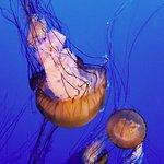 Jelly fish exhibit