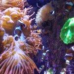 Sea life exhibit