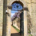 Wisteria through a garden gate