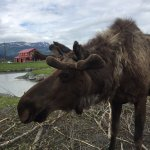 907 Tours: Anchorage - Day Tours Foto