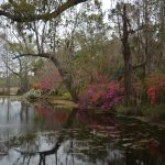 Lowcountry color at Magnolia Gardens