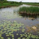 Photo of Wye Marsh Wildlife Centre
