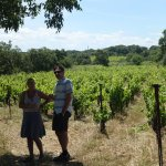 Shady vineyard visit