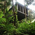 Canopy Bayan at Daintree Ecolodge & Spa