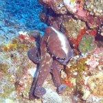 Photo of 3W Dive Gili Air