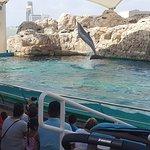 Texas State Aquarium Foto