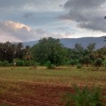 Farms in Saguna Baug. Matheran Hills (Sahyadri Range) clicked from Saguna Baug