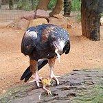 Photo de Featherdale Wildlife Park