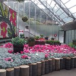 Marvellous display of cyclamen.