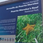 Photo de Parque Nacional Arrecife Puerto Morelos - Puerto Morelos Reef