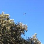 águila la vista