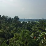 Photo of MacRitchie Nature Trail