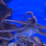 Malta National Aquarium Foto