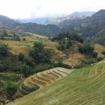 Rice field - Sapa 4 days trekking
