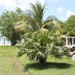 Photo de Hotel Playa Coco