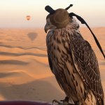Foto di Balloon Adventures Emirates