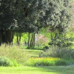 Parc immense avec arbres centenaires