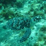 A purchased photo from one of our scuba diving excursions