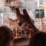 Hello, giraffe!