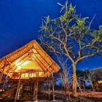 Kikoti Safari Camp Foto