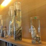 Photo de Icelandic Phallological Museum