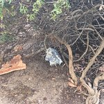 tin foil left under bush on patio