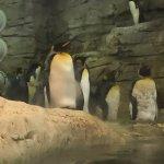 conjunto de pingüinos