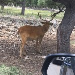 One of the dozens of species of animals just off the road along the drive through the Ranch.