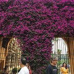 Gorgeous flower covered gateway
