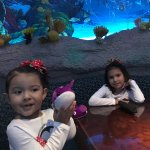 Foto de Downtown Aquarium