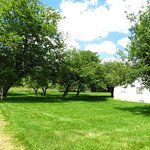 Part of a barn and some of the orchard trees on the property