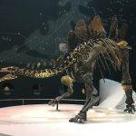 Photo de Musée d'histoire naturelle de Londres