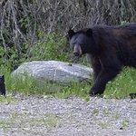 Wells Gray Provincial Park Foto