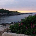 Vue de la mer, des roches et même d'un rosier sauvage qui poussent