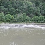 The Greenbrier River, as seen from about 50' from our tent.