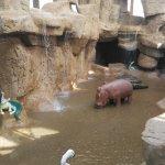 Photo de Jungle Aqua Park