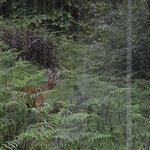 Deer grazing outside our living room