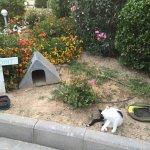 Espace pour les chats dans les jardins