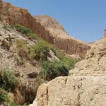 Wadi David, En Gedi Nature Park