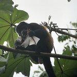 Hello little monkey ! :D
