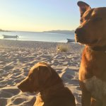 The nicest, sweetest dogs who hiked with us every day