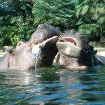 Zoologischer Garten (Berlin Zoo) Foto