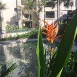 Foto de Pullman Palm Cove Sea Temple Resort & Spa