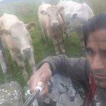 With Farm animals