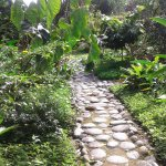 Nice inner garden