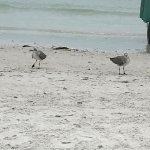 Beach has pretty white sand like Siesta Key main beach